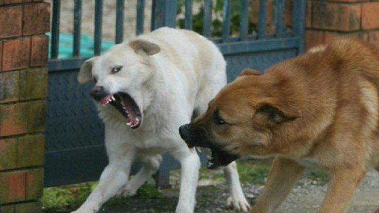 sbranata cani