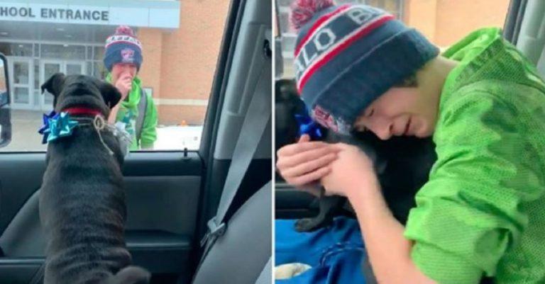 cane smarrito ritrovato reazione bambino