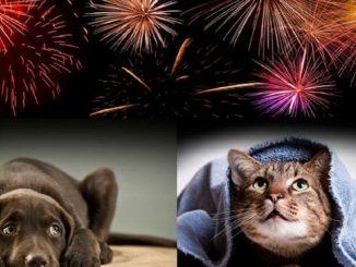 I consigli per proteggere cani e gatti dai botti di Capodanno