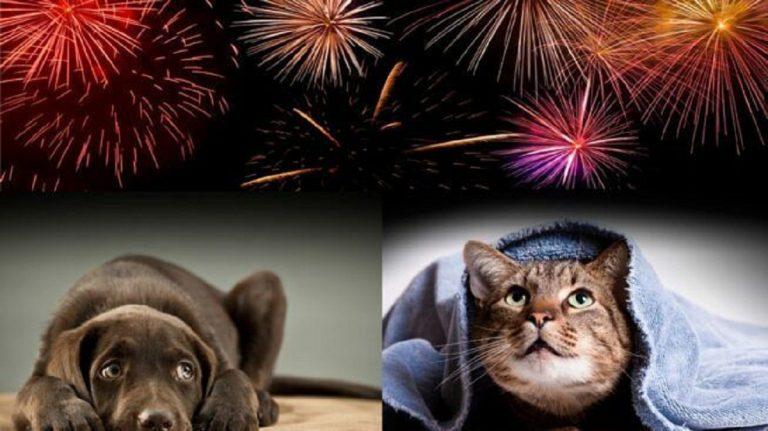 cani gatti consigli capodanno 768x431