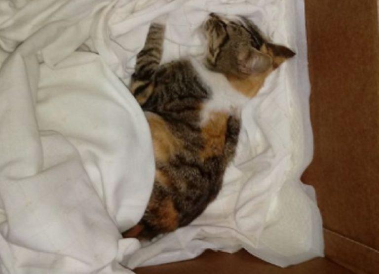 gatto ucciso bastonate