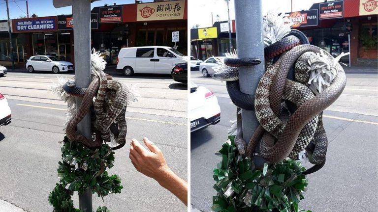 serpenti avvolti decorazione natale