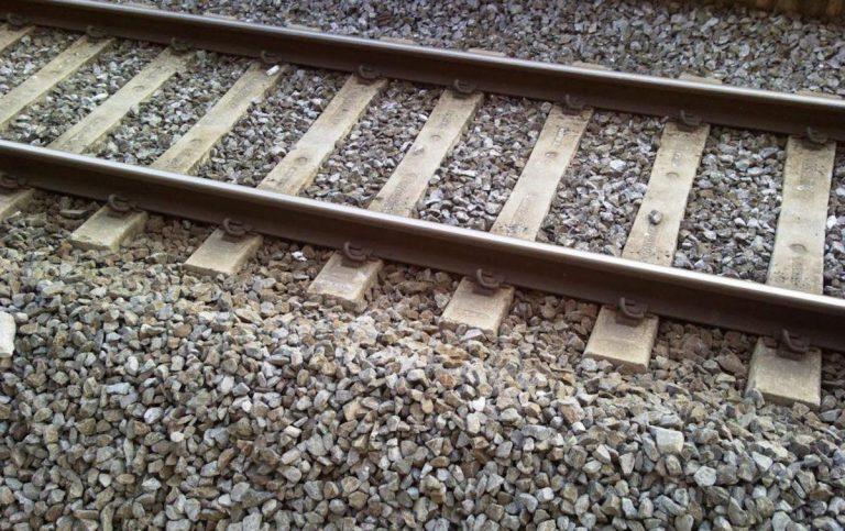 treno investe animale