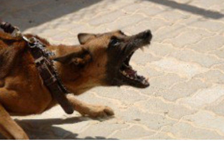 aggredito cane parti intime