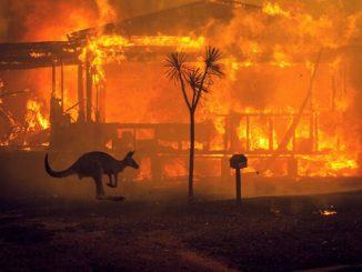 emergenza incendi australia