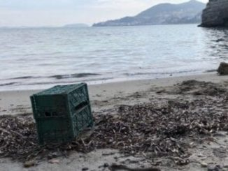 Cane spiaggiato ad Ischia