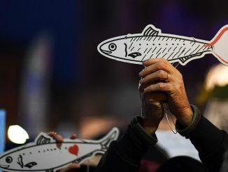 sardine a bologna