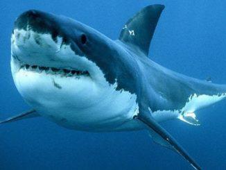 sub ucciso squalo