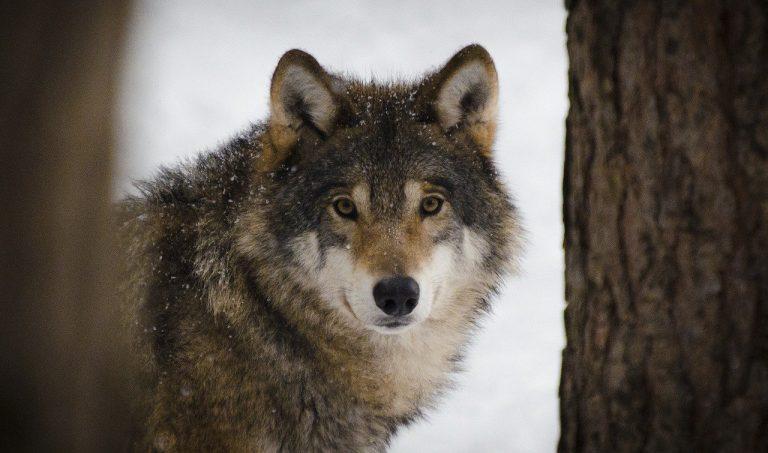 le specie di animali a rischio estinzione in italia