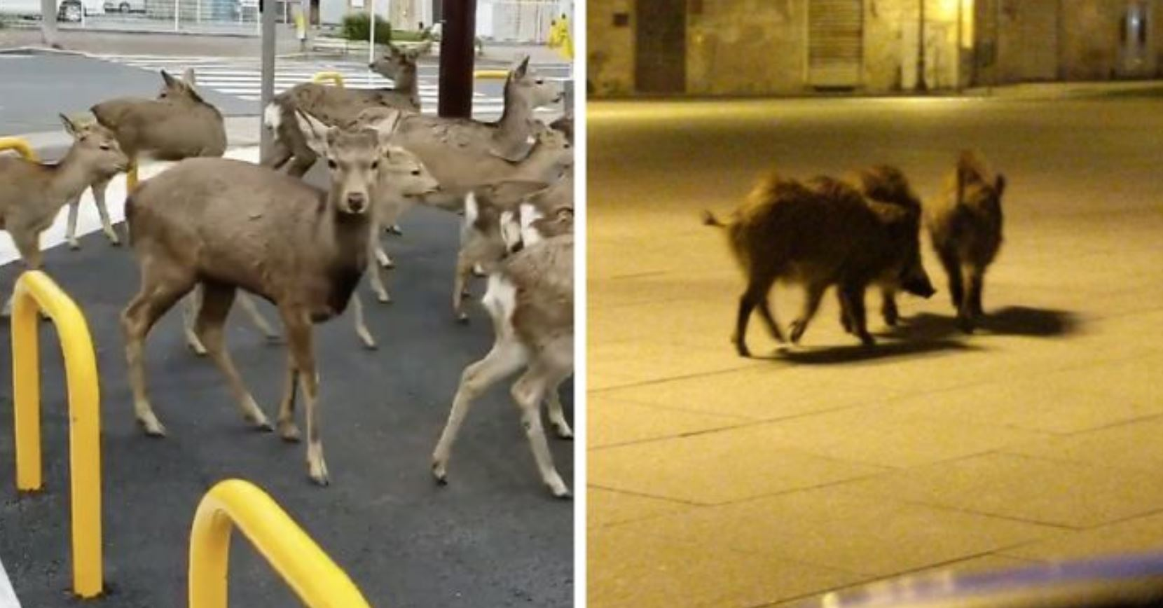 animali città quarantena