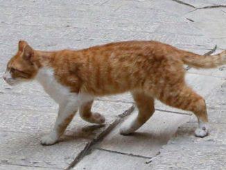 coronavirus gatto positivo