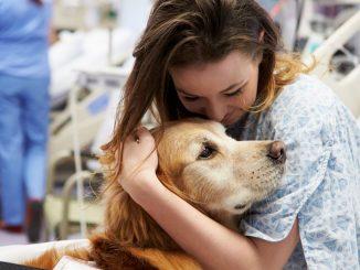 coronavirus, ipotesi cani addestrati a fiutare l'infezione