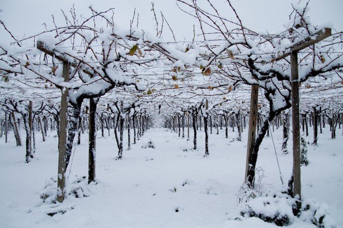Che Tempo Fa A Casoria previsioni meteo, torna il freddo: allarme per i frutteti