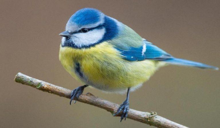Germania: morti 11mila uccelli