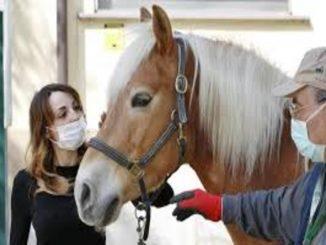 macellazione cavalli grecia