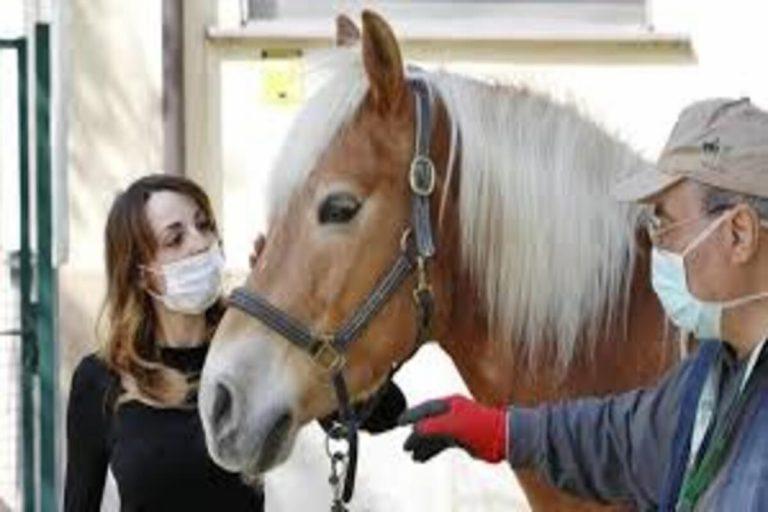 La Grecia vieta la macellazione dei cavalli: in arrivo banca dati nazionale