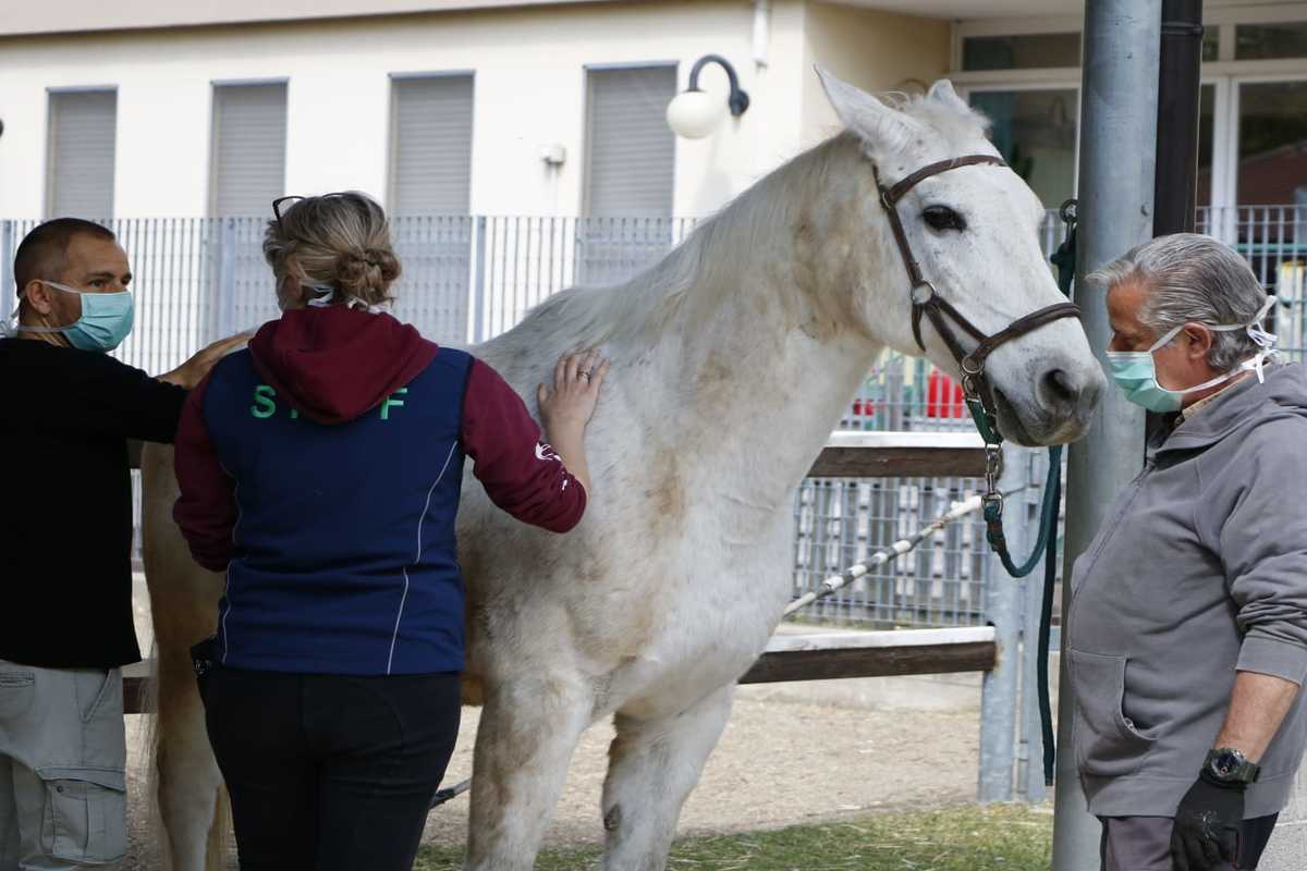 niguarda cavalli curano stress 2