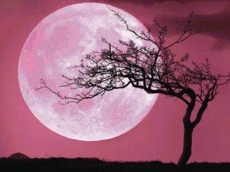 Super Luna 2020, in cielo lo spettacolo