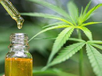 Cannabis e Covid-19, il CBD potrebbe prevenirlo