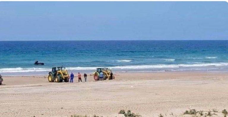 coronavirus-candeggina-spiaggia