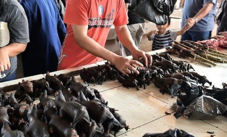 Coronavirus mercati Indonesia pipistrelli