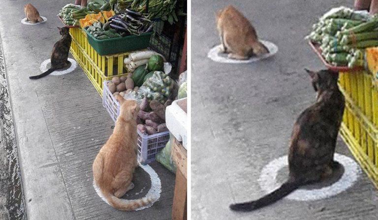 Filippine, gatti a prova di distanziamento