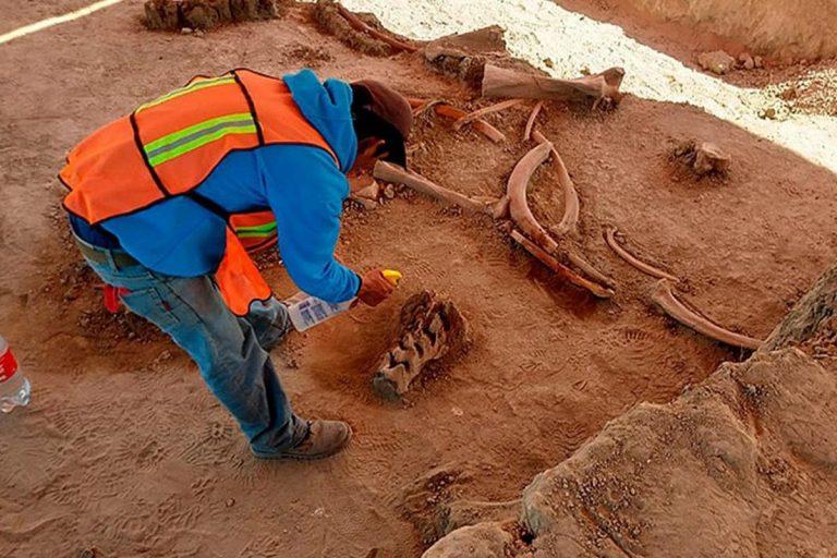 Messico ritrovato cimitero mammut