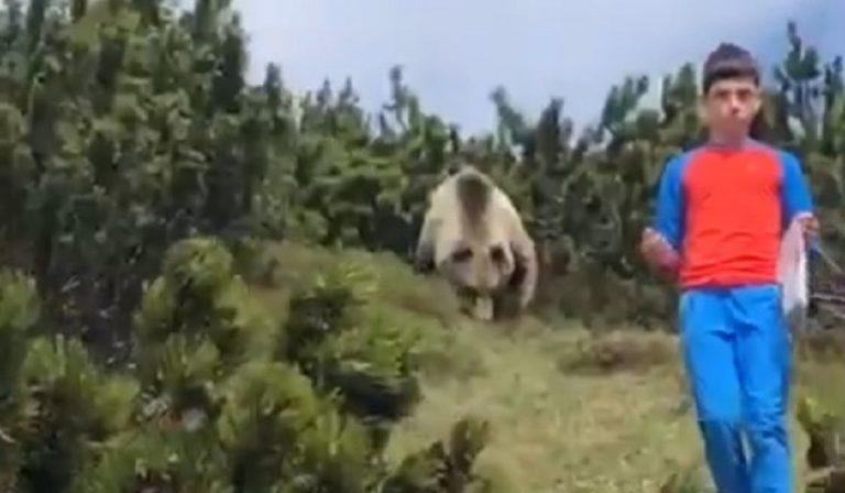 Incontro fra un orso e un bambino in Trentino