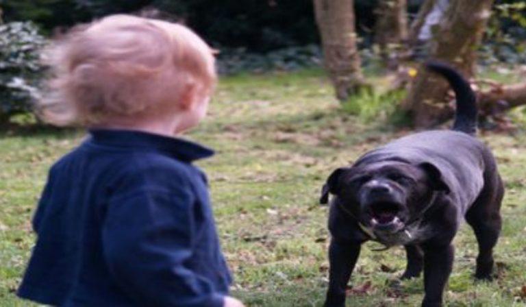 Bambino azzannato dal suo cane, è grave