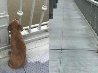 Il cane aspetta il suo padrone, ma lui si è suicidato