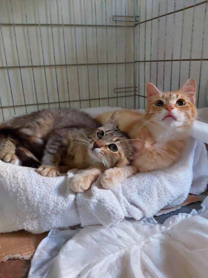 come-comportano-gatti-significato