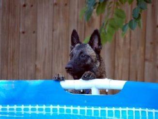 comportamenti-cane