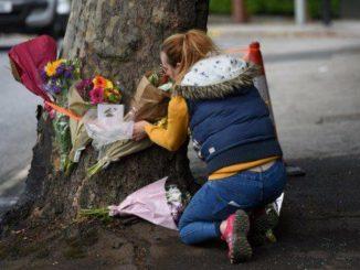 L'albero contro cui la coppia di fidanzati è morta in un incidente