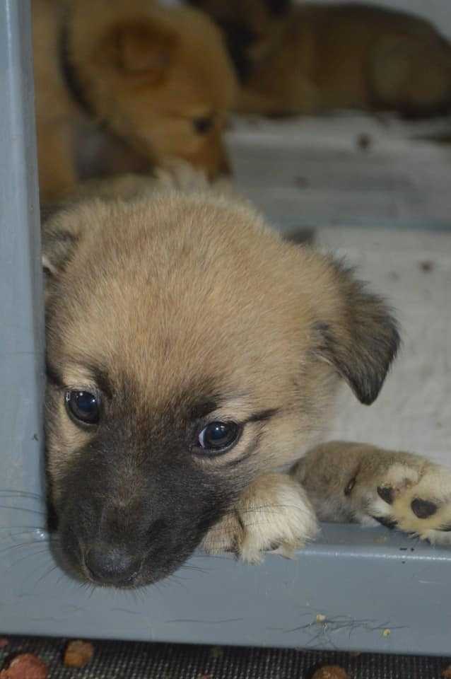 Uno dei tanti cuccioli maltrattati