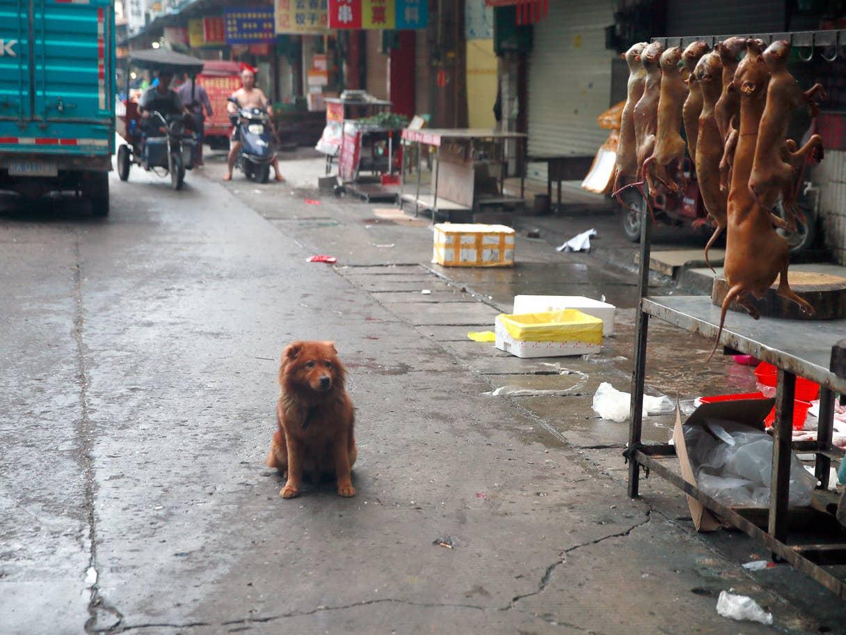 Cane pronto per essere ucciso