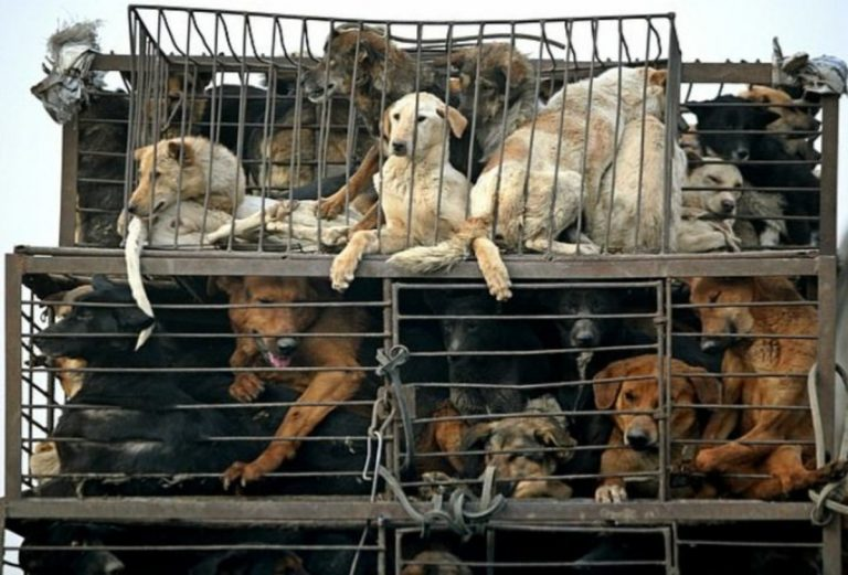 festival yulin 2020 notizie it 1 768x521