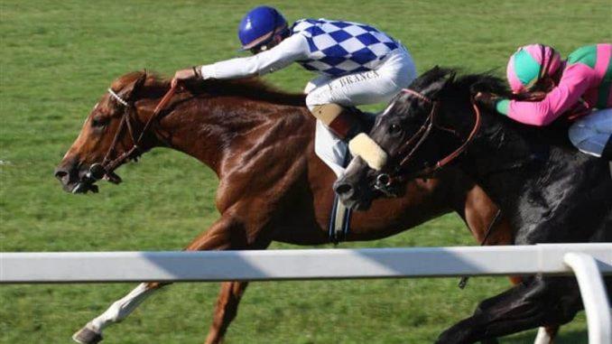 sport-cavallo-elenco