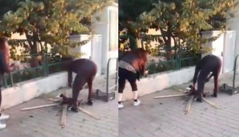gatto ucciso in strada a livorno