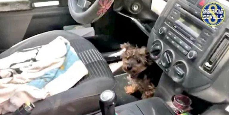 polizia salvato cane auto
