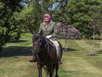 Regina cavallo