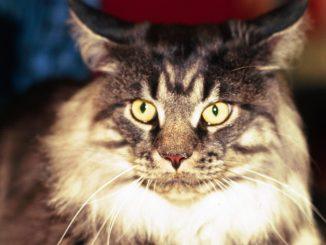 Sequestrati gli animali di una donna, proprietaria del gatto stroncato dal virus