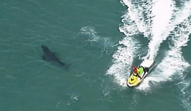 Australia: surfista ucciso da squalo bianco