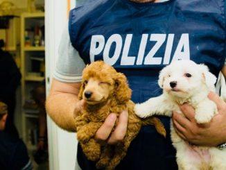 Lodi, traffico di cuccioli sventato