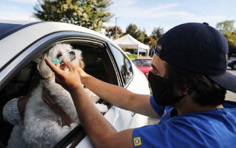 vaccini animali auto california