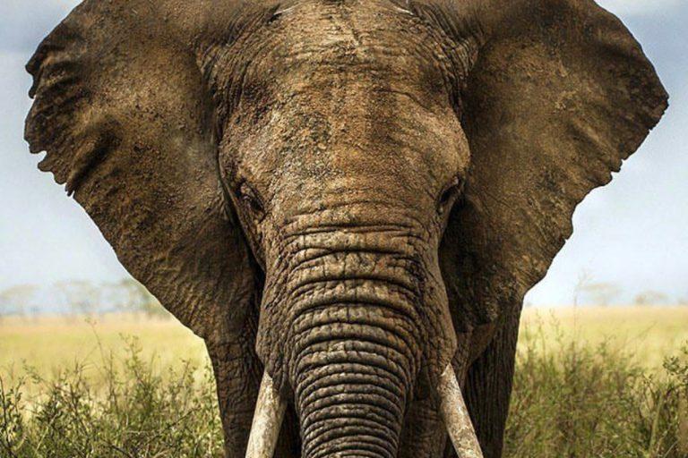 elefante sri lanka uccide studentessa