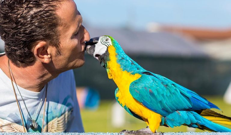 enzo salvi pappagallo 768x448