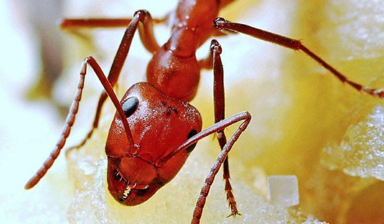 Abbandonata neonata vicino alle formiche, è morta