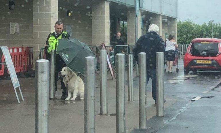 guardia giurata ripara cane con ombrello