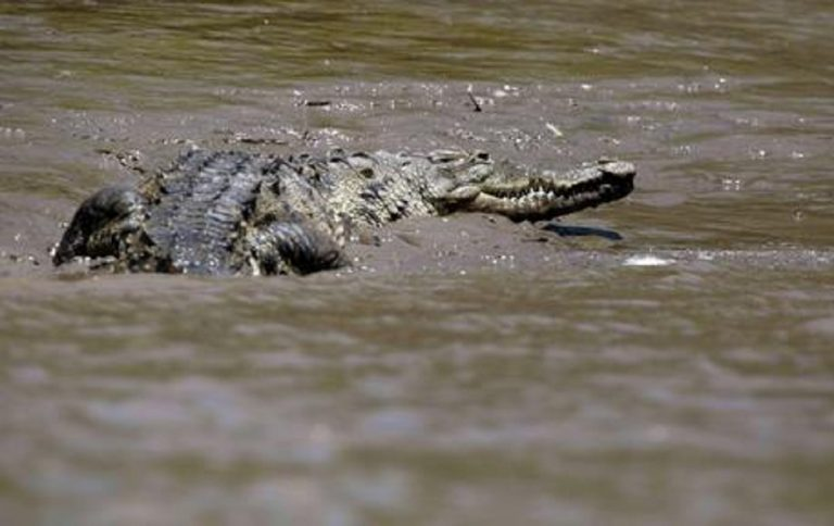 Messico, un bambino è stato aggredito da un coccodrillo