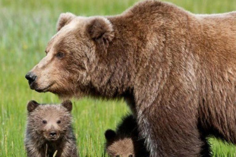 orso trentino sospeso abbattimento